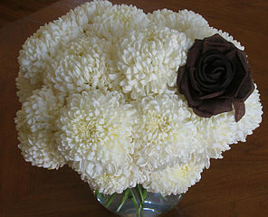 296px-Chrysanthemums_white
