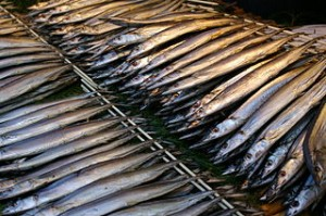320px-Pacific_saury_dried_overnight