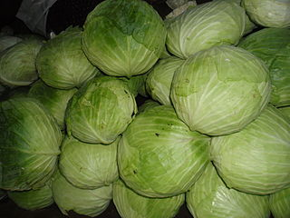 Cabbage_bundle